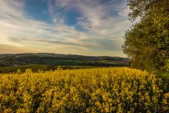 IMG_1919_20_21_fused-2 (Andr Leonhardt) Tags: trees sunset nature beauty clouds landscape deutschland abend heaven sonnenuntergang natur himmel wolken landschaft bume raps hdr erzgebirge
