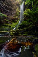 Lovers Falls (hillsee) Tags: fern water flow waterfall rainforest s tasmania curve temperate tannin tarkine tarkinewilderness