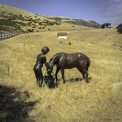 Carmel Valley: The Holman Ranch (Greatest Paka Photography) Tags: california ranch sculpture horse history field landscape estate carmel rancho carmelvalley holmanranch holmansguestranch clarenceholman