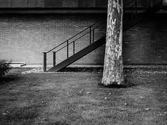 (Nico_1962) Tags: bw zwartwit architecture tree trees boom bomen leica m240 leicam summarit35mm zwolle nederland thenetherlands rangefinder manualfocus urban stad