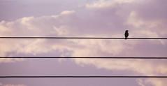 Un tercio de soledad (Carmen Marval) Tags: morning pink blue sky cloud up azul clouds am nikon heaven paradise venezuela rosa minimal amanecer cielo nubes latinoamerica coolpix minimalism minimalismo aire paraiso minimalistic libre minimalist nube madrugada rosado anzoategui anzoátegui l830
