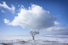 Zucchero filato (Galep Iccar) Tags: italy cloud snow nature clouds landscape italia natura paesaggi paesaggio umbria subasio