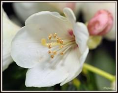 _JVA6801 (mrjean.eu) Tags: park pink flowers blue red roses white france flower macro green nature fleur rose yellow fleurs nikon botanic lorraine botanique parc metz communal 105mmf28