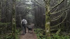 Deep Gap Trail, Mt. Mitchell State Park, North Carolina (netbros) Tags: northcarolina mtmitchell deepgaptrail blackmountainrange mtmitchellstatepark netbros internetbrothers