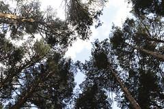 Woods (Macarena Lpez) Tags: woods espinar segovia castillayleon nature outdoors