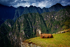 The very majestic llama (Anna Gorin) Tags: majesticllama machupicchu peru southamerica travel landscape domesticanimal llama inca mountains canon 5diii tamron 28300mm