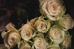 (tia_maria) Tags: flowers roses 50mm tiamaria bouquet nikond90