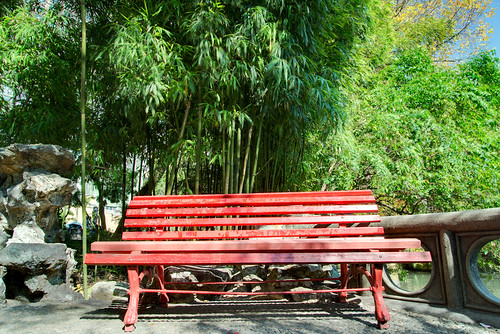 Red bench near bamboo and water