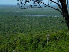 Iwokrama Forest and Buro-Buro River