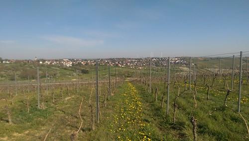 Weites Land bei Zornheim