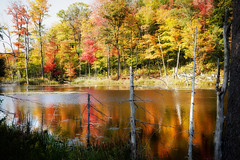 Golden Reflection_9952 (hkoons) Tags: autumn trees orange sunlight ontario canada color green fall leaves pine forest season colorful bright fallcolors sunny yellows deciduous reds horseshoelake firs conifer