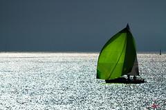 régate au large de la Trinité sur mer (gillouvannes56) Tags: