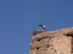 Medina Storks