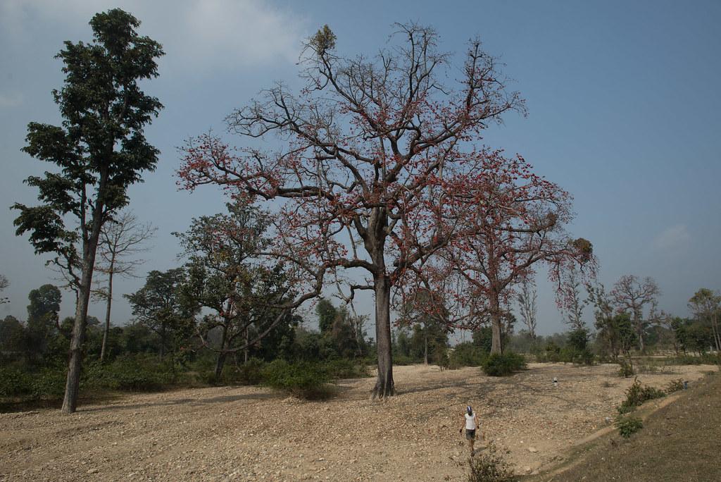 Amazing Flower Trees