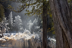 { A Northwoods Fairy Tale } (Boreal Bird) Tags: trees mist ice water fairytale river frozen frost power explore evergreens lakesuperior forces cedars northwoods enchanting springmelt gooseberryriver riverspray clashofseasons maryamerman