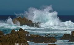 April15PG0065 (Michael T. Morales) Tags: waves pacificgrove ptpinos