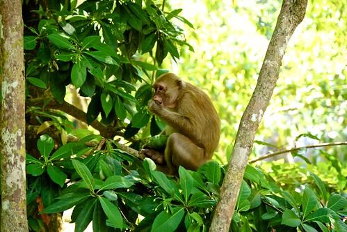 Monkey at Erawan waterfall in Kanchanaburi province, Thailand