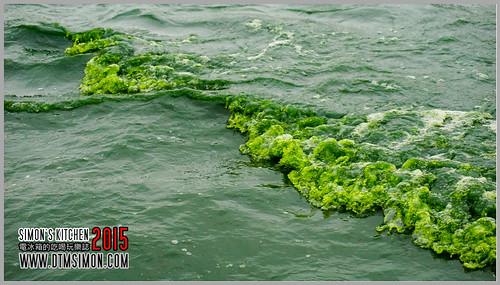 台灣綠藻14.jpg