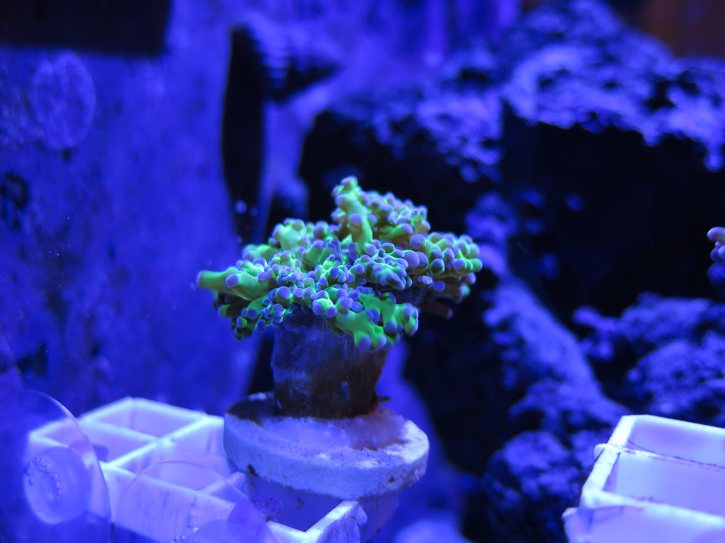 The world 39 s most recently posted photos of nano and reef for Aquarium recifal nano