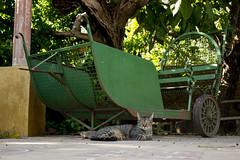 El patio de casa (homeroprodan) Tags: light cats house verde green luz home argentina cat garden casa natural jardin gatos patio gato cordoba gata carro misfotos gatto gatti gatta