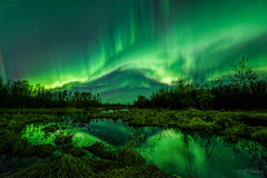 Dreamland (WherezJeff) Tags: canada reflection green curtain alberta aurora marsh legal northernlights auroraborealis