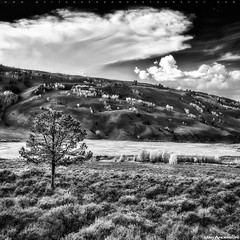 Crystal Creek Canyon Hillside #2 in BW (Matt Anderson Photography) Tags: travel autumn sky usa cloud tree fall tourism water colors vertical wisconsin creek season landscape outdoors photography gold nationalpark rocks stream day crystal outdoor hiking fallcolors hill scenic nobody canyon adventure madison land yellowstonenationalpark northamerica destination kelly flowing wyoming grandtetons aspen hillside cascade scenics lansdscape haydenvalley colorimage westernusa ruralscene nationalelkrefuge waternature otherkeywords mattandersonphotography zzzpics