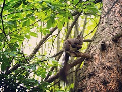 Squirrel in the City (fru.gru) Tags: world wood tree green nature animal forest landscape outside squirrel europe outdoor poland krakw