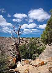 As close to the edge as I can without going over (Carolannie...sorta here and there) Tags: colorado edge vignette juniper lightroom lifeontheedge deltacountyco lightroompresets april2016 sonyrx100m2 westernslopeco dominguezescalantenationalconservationareadeltacountyco