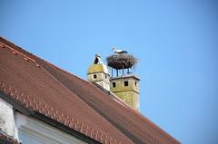 Freistadt Rust (anuwintschalek) Tags: austria spring rust may stork burgenland frhling storch kevad kurg toonekurg rustamneusiedlersee d7k kurepesa nikond7000 freistadtrust 18140vr