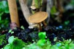 You shouldn't be there (padge83) Tags: trees brown macro green mushroom garden nikon mud westyorkshire d5300