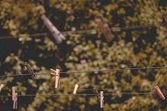 Disappear (juanpablo.sl) Tags: orange green nature bokeh clothespins dangler