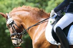 IMG_2239 (dreiwn) Tags: horse pony horseshow pferde pferd equestrian horseback reiten horseriding showjumping dressage reitturnier dressur reitsport dressyr ilsfeld dressuur ridingclub junioren ridingarena pferdesport springreiten reitplatz reitverein dressurreiten dressurpferd dressurprüfung tamronsp70200f28divcusd jugentturnier