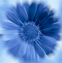 exbluetion (roverguybm) Tags: blue flower macro circle sigma105 nikcollection
