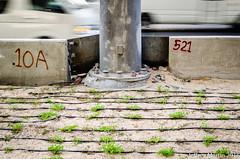 (Dubai Jeffrey) Tags: street plant wall dubai pole 10a ars trafic 521 szr