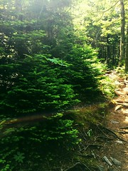 IMG_1744 (daach14@sbcglobal.net) Tags: usa vermont nature outdoor green photo trip travel sky blue woods trees forest beauty life moutain rock rocks view iphone6 panorama