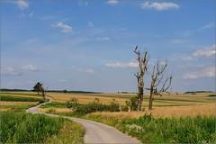 suloszowa i zadol 197 (pinusfoto) Tags: tree witheredtree field polish road