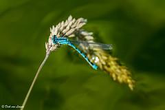 K3_39987_1_2048px (DJvL) Tags: amsterdame waterleiding duinen wildlife birds outdoor pentax k3 hddfa150450