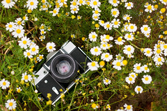 "When words become unclear, I shall focus with photographs."" (_anke_) Tags: camera flowers white reflection green nature field grass yellow digital photography 50mm dof meadow vintagecamera wildflowers kamille cameraportrait anseladams russiancamera 2016 zenite analogcamera primelens phoetry chamomilla ussrcamera"