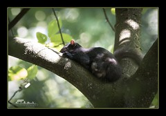 Time away from the kids (the_coprolite) Tags: canada nikon squirrel bc britishcolumbia sigma d750 coquitlam portcoquitlam hoycreek 150600mm