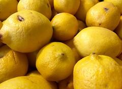 208/365/5 (f l a m i n g o) Tags: yellow fruit lemon july 18th citrus monday 2016 project365 365days 19992