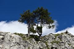flora blufumo (pianlux) Tags: alberi blu fumo due cielo nube tree nuvola azzurro