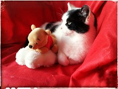 And then his friend arrived (Snappergus) Tags: winniethepooh disney beanie black white cat blackandwhitecat puss pussy mog moggy tux tuxedo
