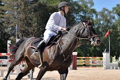 DSC_1042 (2) (ploufjf_64) Tags: paus show jumping chevaux pau 2016
