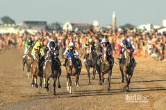 Carreras en la playa (miguel68) Tags: cdiz playadelacalzadapiletas sanlucardebarrameda caballos jinetes jockey