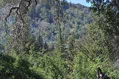 DSC_0376 (oblomberg) Tags: bigsur hwy1 pfeifferstatepark montereyca