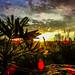 """Nascer do sol em Milho Verde<br /><span style=""""font-size:0.8em;"""">Nascer do Sol no monumento natural Várzea do Lageado, Milho Verde, distrito do Serro-MG<br /></span>"""