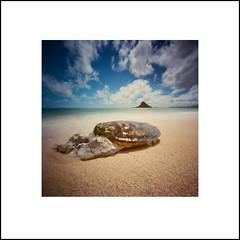 Honu (art y fotos) Tags: 120 6x6 film mediumformat hawaii oahu handmade bamboo pinhole homemade honu seaturtles bambole beachcombing kualoa mokolii greenseaturtles kualoaregionalpark kodakektar100 bamboopinholecamera coffeepincam lebambolemkxvi