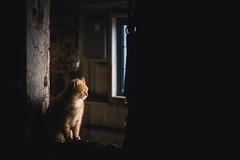 sunbathing (Jen MacNeill) Tags: orange pet cats pets animal barn cat ginger farm stall stable