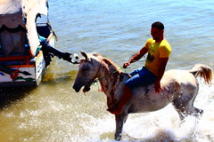 Swimming Horse (Husam Abu-Hamdeh) Tags: red sea redsea jordan aqaba canon1200d