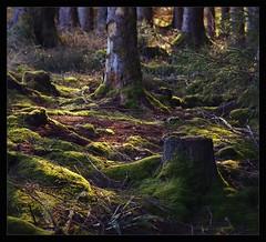 damp forest floor